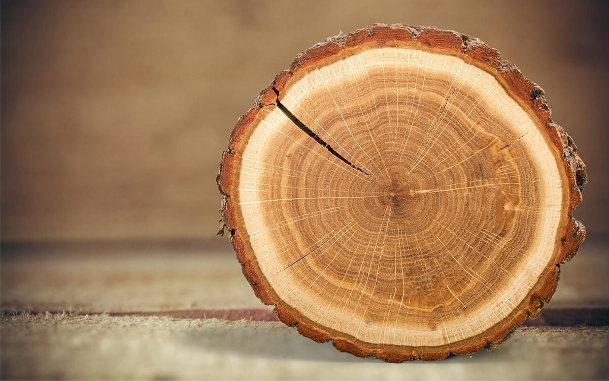 ¿Cómo se mide troncos de madera?