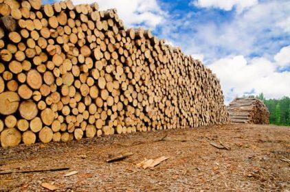 Pulpwood measurement methods explained