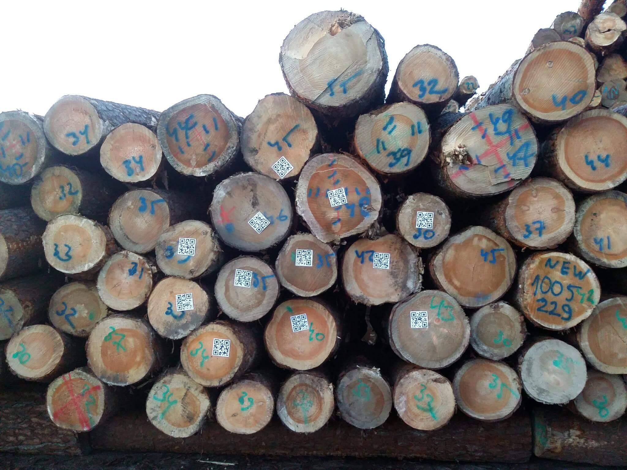 Timbeter erkennt jetzt nicht nur durchmesser sondern auch QR codes die perfekte losung fur alle die rundholz in containern exportieren!