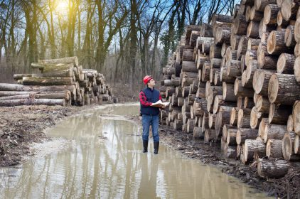 Why is precise digital timber measurement important?