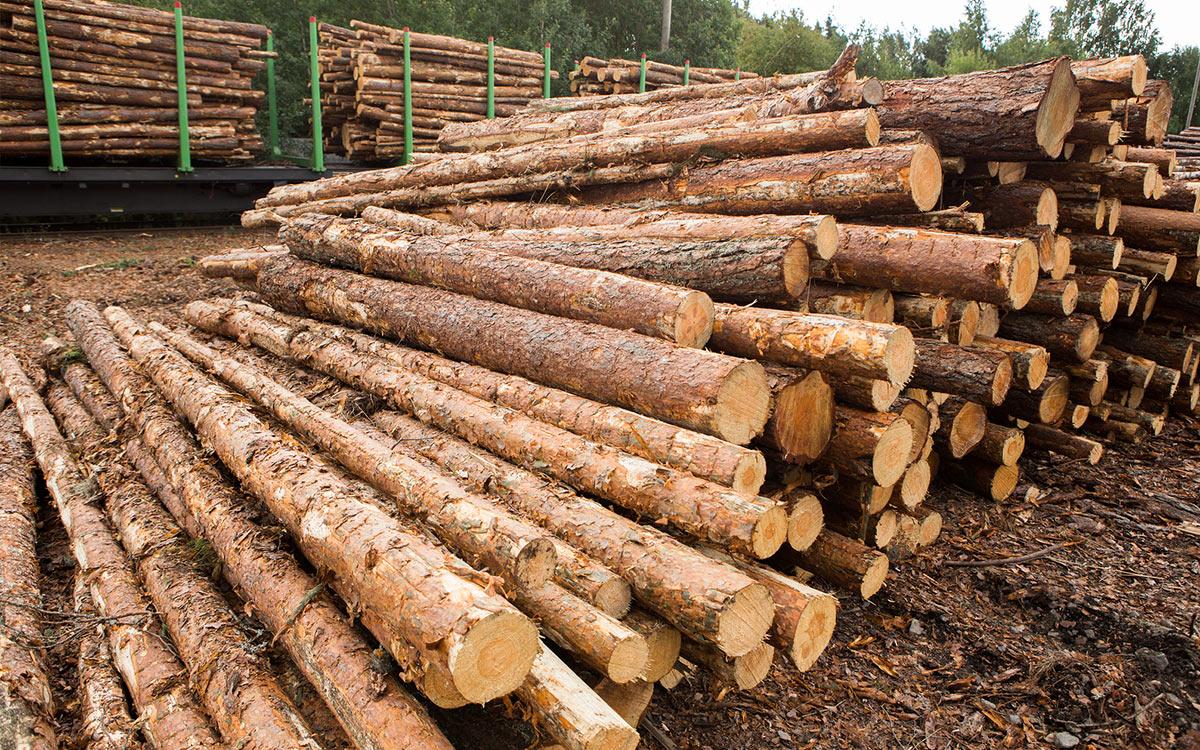 ¿Se preguntó cómo el Timbeter mide troncos de manera tan precisamente?