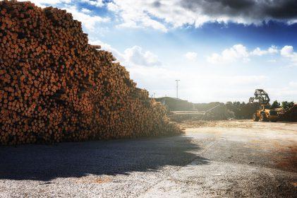 Problemas Comuns Na Medição De Madeira Para Celulose