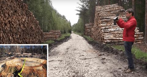 Rankinis medienos matavimas prieš skaitmeninį: kaip galima sumažinti Išlaidas?