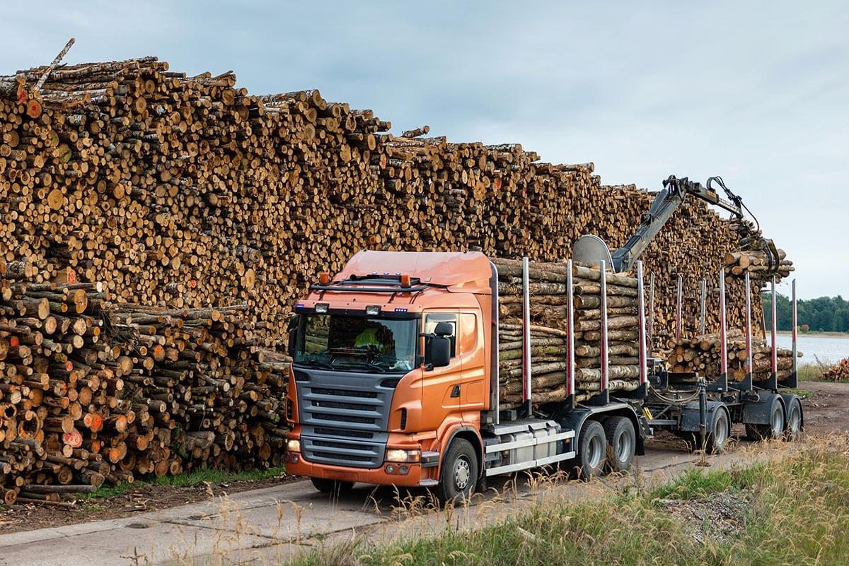 Лесовозы и транспортные компании