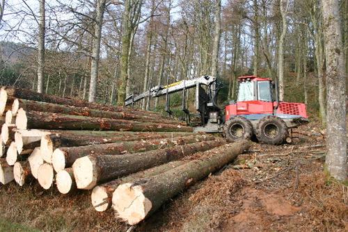 2019 в лесной индустрии: прогнозы.