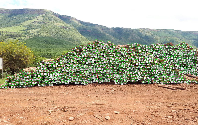 Percepções do setor florestal na África do Sul