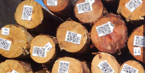 How Timbeter is helping forestry companies become more profitable