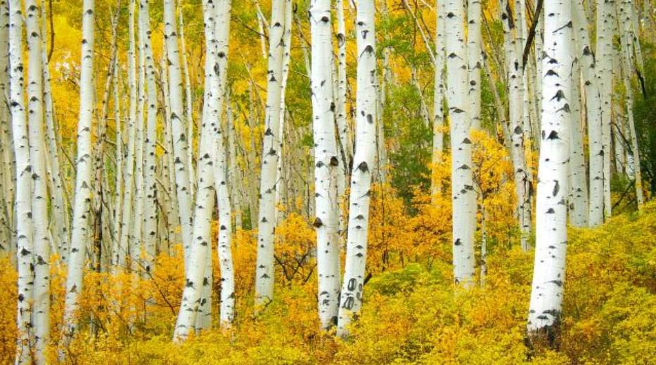 Conheça as espécies de árvores mais usadas com o Timbeter