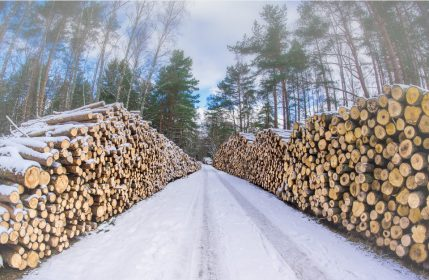 How do weather conditions affect log measuring?