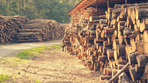 Timber for Construction; Maximize roundwood value with Timbeter