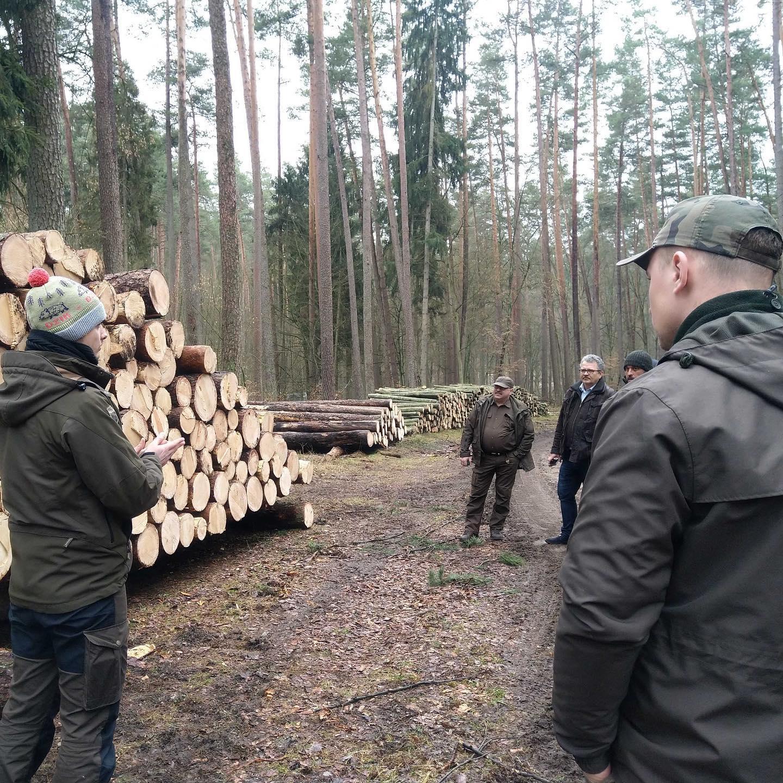 Timbeter alustas Poola riigimetsaga koostööd