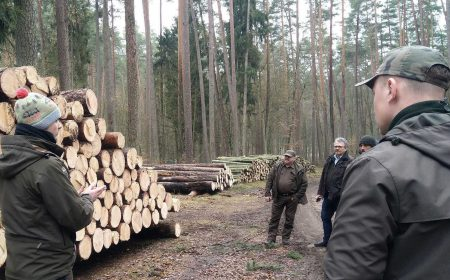 The State Forests of Poland National Holding in cooperation with Timbeter